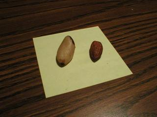 brazil nut vs almond